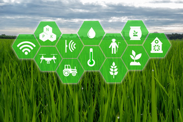 Wall Mural - iot, internet of things,farmer agriculture concept, Smart farm with Robotic icon (artificial intelligence/ ai) use for management , control , monitoring, and detect with the sensor in the farm, field.