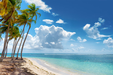 Blue sky,coconuts trees,  turquoise water and golden sand, Caravelle beach, Saint Anne, Guadeloupe, French West Indies. Wall mural