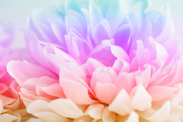 Beautiful colorful flowers made with color filters, soft color and blur style for background