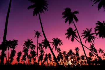 Silhouette coconut palm trees with sunset and flare sky background.