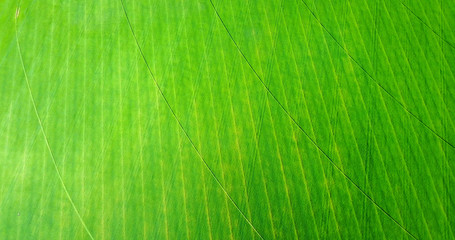 Aerial View Of Green Farm Field With Circular Irrigation Pattern - Idaho, USA