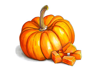 Colorful and juicy illustration of orange pumpkin. Drawing alcohol markers useful vegetable. Veggie food.