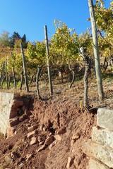 Schaden an der Trockenmauer in Weinbergen bei Esslingen (Baden-Württemberg)