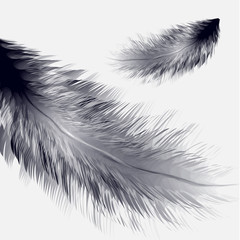 Vector illustration of realistic bird feather