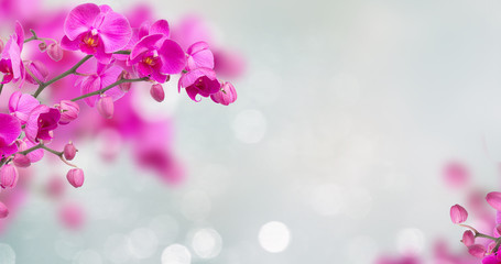 Photo sur Plexiglas Orchidée Purple orchid flowers with butterflies on defocused gray background banner with copy space
