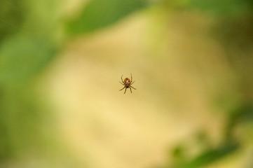 Kleine Spinne im Nichts ihres Netzes