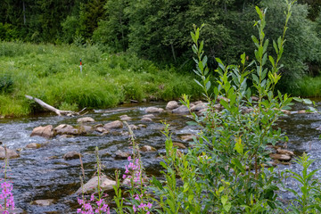 rocky stream of river deep in forest in summer green weather with sandstone cliffs