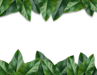 Tropical palm leaves with empty paper for your design  Minimal nature. Summer Styled. Flat lay, Original dimensions 7500 X 5780 pixels