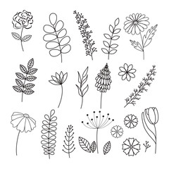 Vector hand drawn collection Herbs and Flowers.