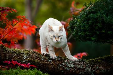 Bengal Kitten on Tree