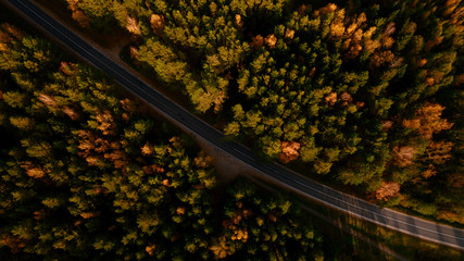 Aerial drone shoot. Road bend and autumn trees in forest in Belarus. Yellow and green nature, top view.