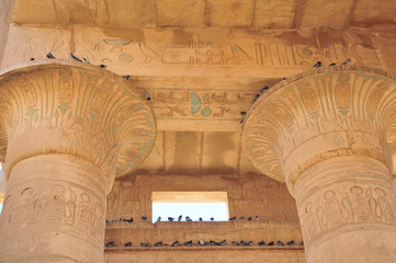 Pigeons hiding from the sun on top of the columns of of Ramesseum at Thebes, Luxor, Egypt