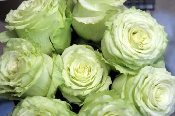 roses blanches vu de dessus