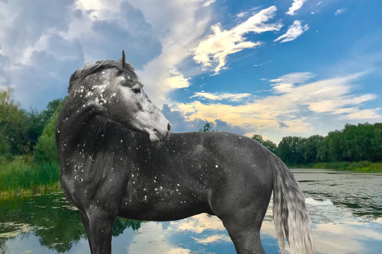 spotted horse looks back against a lake