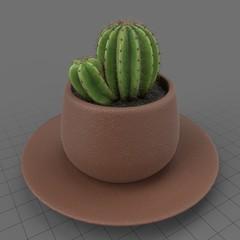 Cactus growing in pot