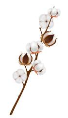 Realistic Cotton Flower Branch Composition