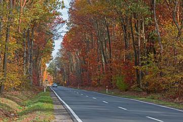 Afaltowa droga przez jesienny las.