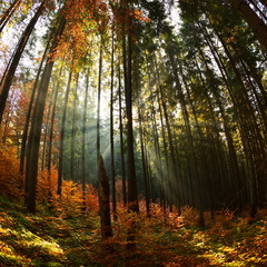 Papiers peints Forets Warm autumn scenery in the forest, with the sun casting beautiful rays of light through the mist and trees