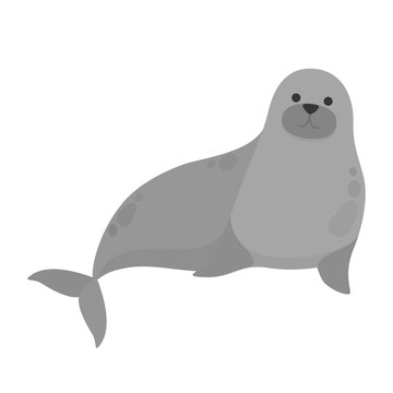 Seal water animal. Cute creature from the sea