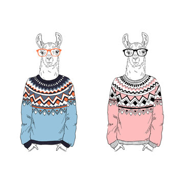 Llama in ugly sweater.