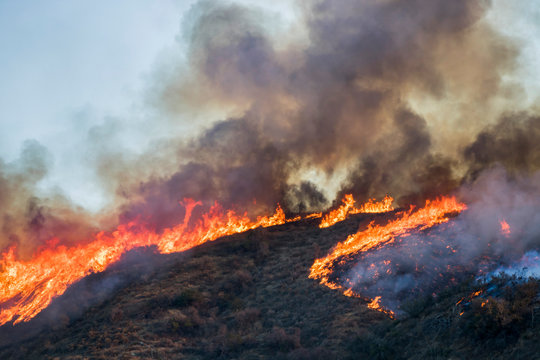 Brush and Tree Landscape Burning with Flame and Smoke During California Wildfire