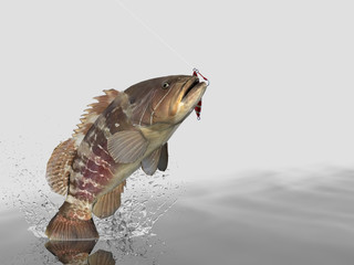 Cathing bottom dweller grouper fish in white background with splashes hooked by slow jigging inchiku 3d render