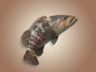 Side view of jumped grouper  epinephelus fish 3d render in colored background