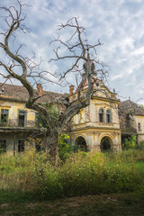Old abandoned medieval castle with scary tree in the front