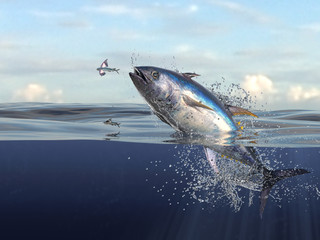Tuna fish jumping out of water half of it in water, so many splashes and action in ocean 3d render Wall mural