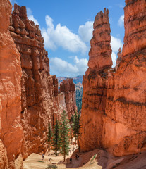 The Navajo Loop Trail's Wall Street - Bryce Canyon