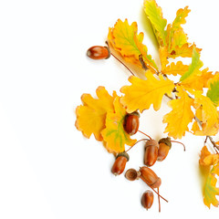 Dried acorns with oak leaf isolated on white. Free space for text.