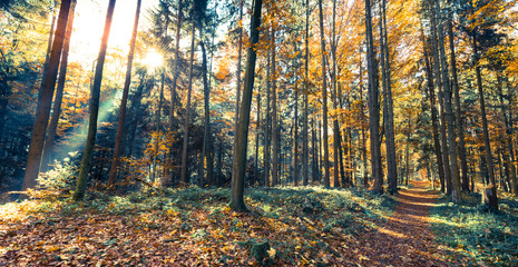 Sun in autumn forest.