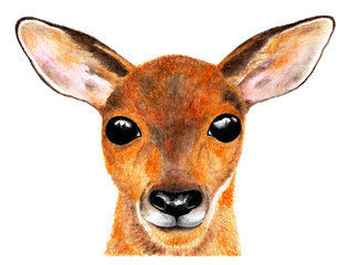 Portrait of roe deer. Watercolor illustration. The deer's looking directly at the camera. Baby looks big eyes. Illustration for design, decor, printing.