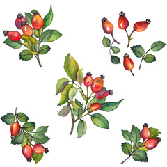 Watercolor set of red rosehips berries with green leaves. Hand drawn illustration on white background. Isolated elements for design.