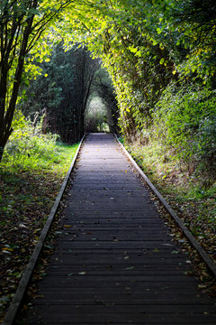 A path for wheeled chairs through the woods in Pishiobury Park in Sawbridgeworth, Hertfordshire. It allows access to the river and wetlands