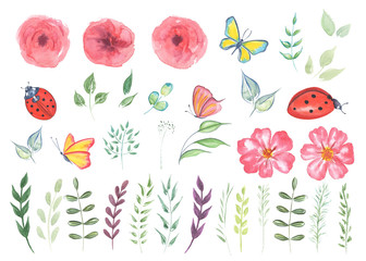 Big Collection watercolor elements - wild flowers, herbs, leaf, butterfly, ladybug.