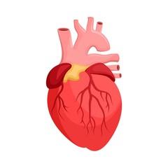 Human anatomy. Heart, internal organ. Medicine and health. Flat style. Cartoon.