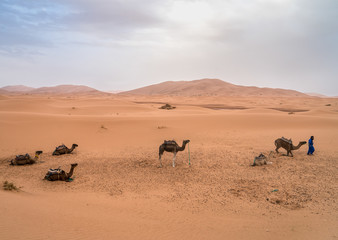 Erg Chebbi Dunes and Five Camels