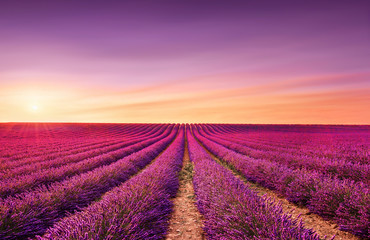 Lavender fields at sunset. Provence, France