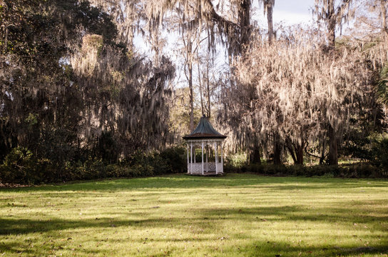 Beautiful canopy of live oak trees and resurrection ferns with spanish moss by a white gazebo at the Magnolia plantation in Charleston, South Carolina.