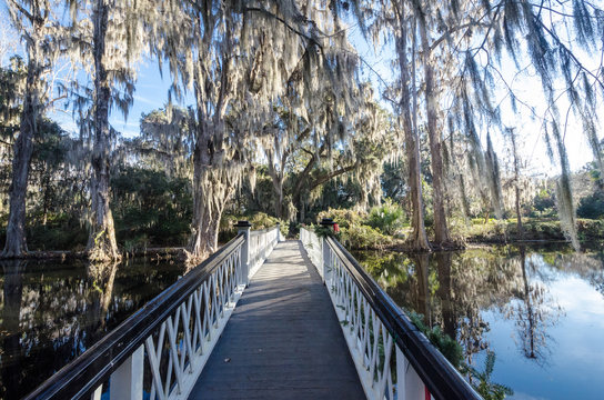 Canopy of live oaks trees with fern, draped with spanish moss over a white bridge  at Magnolia Plantation