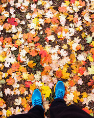 autumn leaves in park