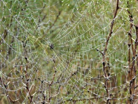 Morning Dew on a Weavers Web