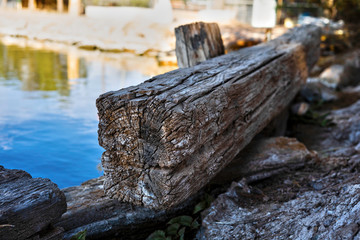 logs and cool waters