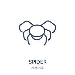 Spider icon. Spider linear symbol design from Animals collection.