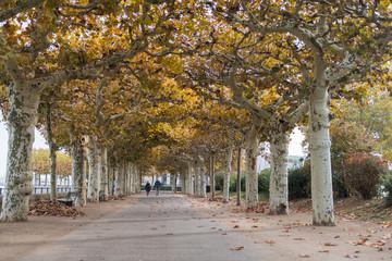 Herbstspaziergang unter einer Laub-Allee