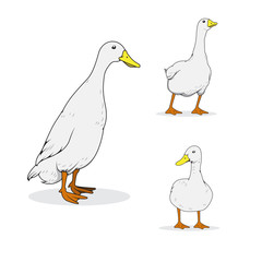 Ducks Vector collection