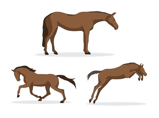 Horses in various poses Vector Collection
