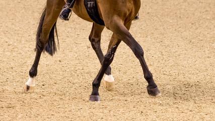 Fototapeten Pferde Dressurreiten Trabtraversale