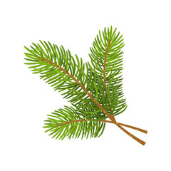 Vector illustration of christmas tree branch isolated